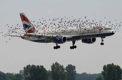 AIRPORT SAY WE MIGHT ENCOUNTER A FEW BIRDS COMING IN TO LAND.