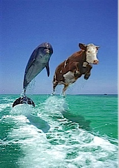 """A sign of good Fen Shui, """"A cow and a Dolphin jumping out of the sea together."""