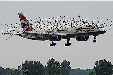 There are reports of a few birds on the approach to the airport SIR..jpg